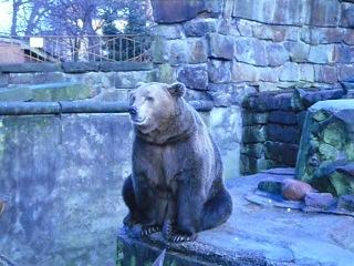 Медведь топтун попрошайка